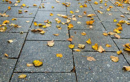 hojas antiguas: vista lateral de hojas amarillas de las hojas dispersas en el pavimento de piedra