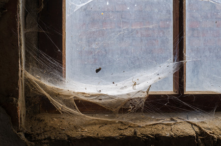 elaborate: elaborate spiders web with caught prey in the corner of an old window