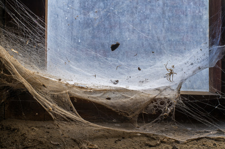 large spider web structure with caught prey stretching across an old dirty window