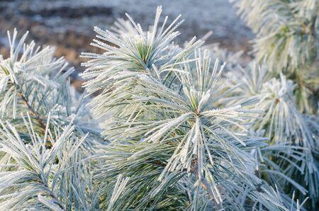 detail of frostbitten plants in winter