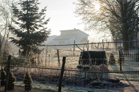 frostbitten gardens in the countryside during winter morning sunrise Stock Photo