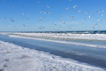 雪と氷ユールマラのリガのゴルフのバルト海の海岸にカモメの群れ
