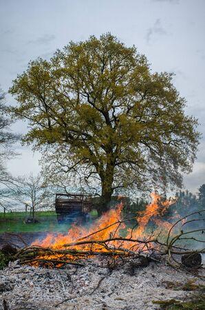 一見ヨーロッパ農村でエステル篝火の燃やされた灰の中から成長して大木 写真素材