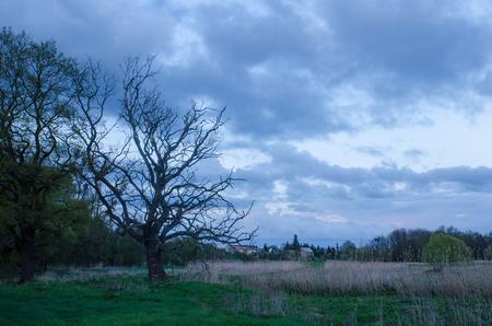 曇りの夜の平和な村上空で古いツリー会議 写真素材