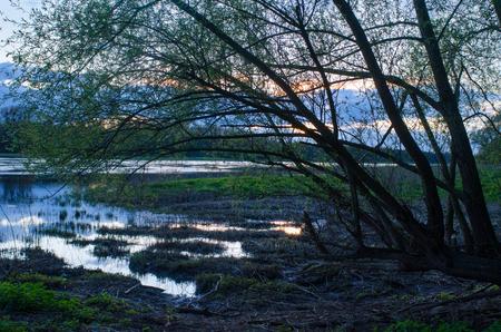 エルベ川の自然で穏やかな夕日