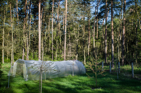 sunlight painting beautiful shadows into the forest behind a garden with a greenhouse tent in the village 写真素材