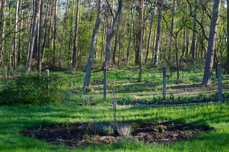 花と緑の芝生の庭に美しい背景を構築朝の太陽に照らされた美しい森絵画