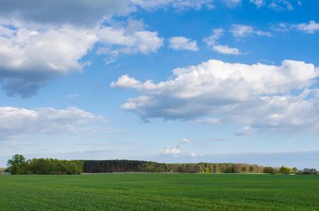 春の晴れた日に美しい曇り空の下、緑の芝生のフィールドの後ろに遠くの森