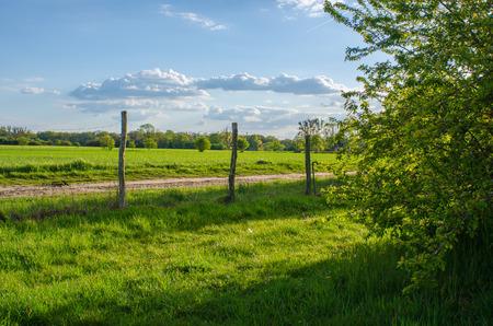 開花木の後ろに隠れている美しい自然の風景と田園風景