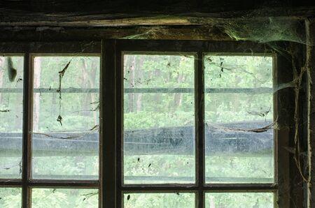 蜘蛛の巣で覆われている古い窓から外の森を表示します。