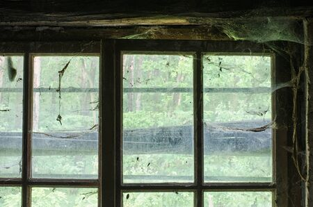 view to the forest outside through the old window covered with spiders web