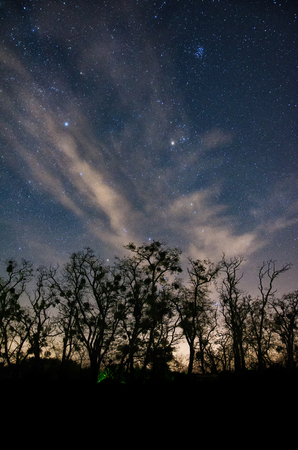 Constellation of Taurus rising above silhouettes of large old trees just after sunset with clouds enriching this picturesque scene 写真素材