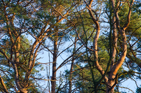 blue sky breaks through the thick wild forest illuminated by the early morning sun at the end of autumn