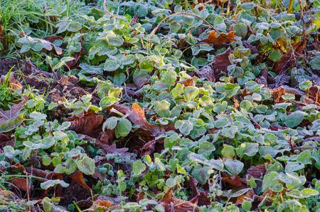 秋の終わりに早朝に凍土のパッチを照らす太陽光