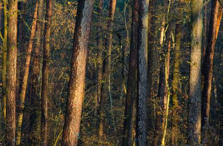 森の晴れた秋の朝