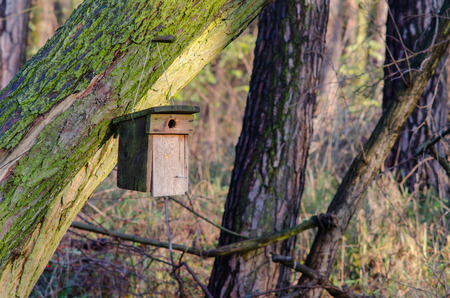 a self made nesting box hanging on the sunlit morning at the end of autumn in preparation of the frosty season 写真素材