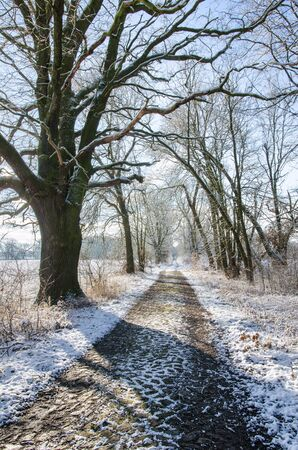 Snow covered path into the depths of the winter forest along an alley of bare trees