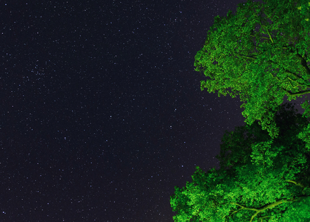 the stars of constellation Leo, the lion, resting on the green lush tree tops on a calm starry night 写真素材
