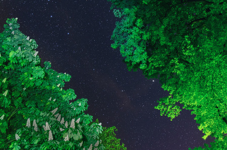 A river of stars flows between the lush green chestnut and oak trees  on a calm spring night 写真素材