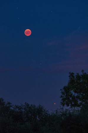 Total lunar eclipse  with red moon, stars and planet Mars over the tree tops 写真素材