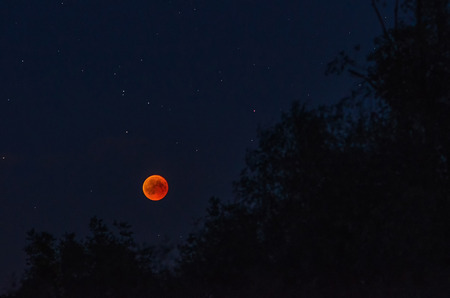 Total lunar eclipse  with red moon and stars over the dark silhouettes of trees