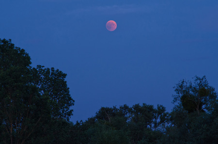 Total lunar eclipse ,  over the landscape of trees 写真素材
