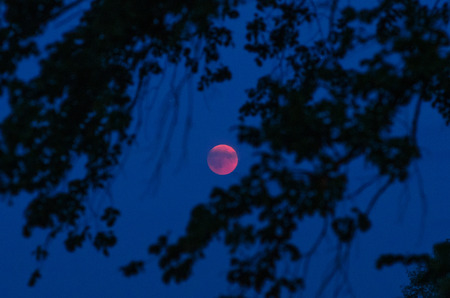 Total lunar eclipse  with some clouds overlaying the moon framed by silhouettes of trees