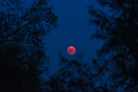 Total lunar eclipse   with moon and stars framed by silhouettes of trees