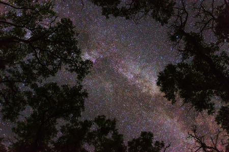 Milky Way galaxy and countless stars showing their glory and color in the night sky framed by silhouettes of tree tops