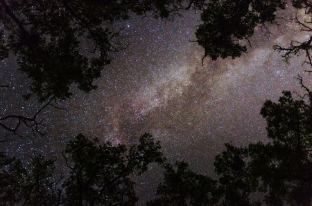 Colorful Milky Way galaxy with a multitude of stars in the background of Earths trees