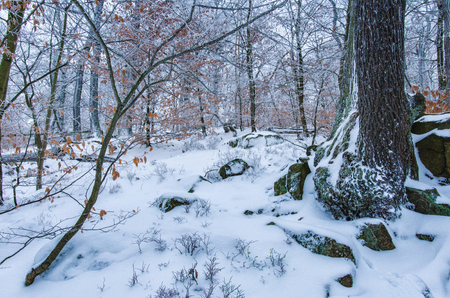 a beautiful peaceful scenery in the rocky forest in Harz mountains in Germany after first fresh snow in winter