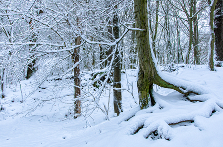 wonderful natural scenery in the wintery forest in the Harz mountains in Germany 写真素材