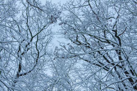 bare tree branches covered with fresh snow against the sky background