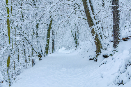 A beautiful alley in the wintery forest after fresh snow in the Harz region of central Germany