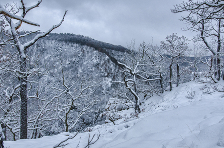bare trees covered in snow at the hills of the Harz mountain range on a cloudy winter day
