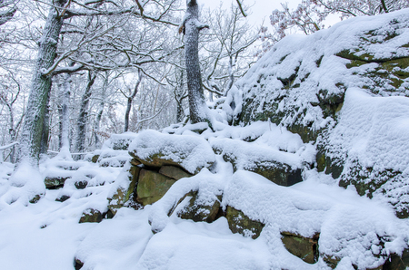 the rocky ground of the forest in Harz mountains covered with fresh snow in winter