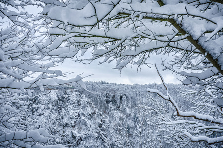 snow covered branches of forest trees on the Harz mountains frame beautifully the ancient rock formations at the Hexentanzplatz 写真素材
