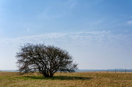 solitary bare tree in the green field under a cloudy blue sky
