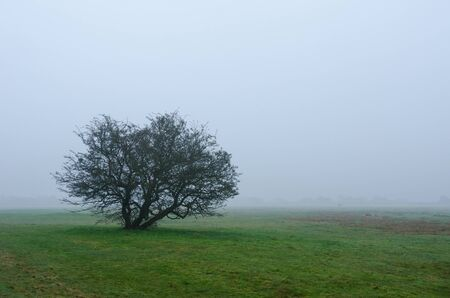 solitary bare tree in the green field enveloped in spring haze Stok Fotoğraf