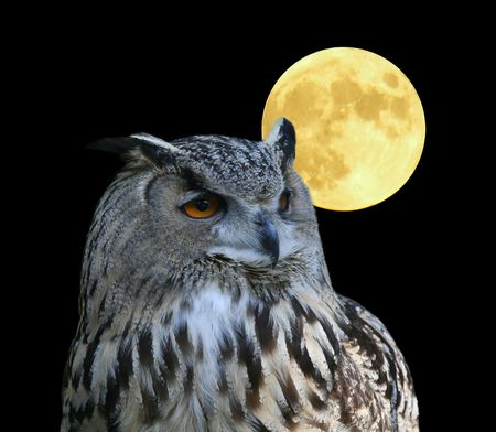 witty: A photo of an owl