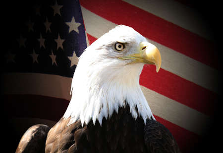 Bald eagle over flag photo