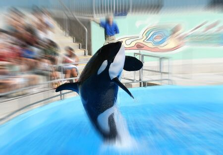 Whale jumping at zoo Stock Photo - 477302