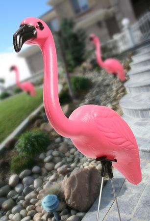 Pink flamingos in the landscape of a residential home photo