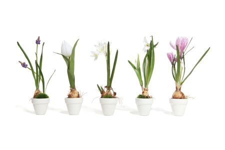 Five colorful flowers in the growth stage of life Stock Photo - 697833