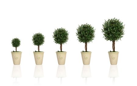 widening: A plant gowing through different growth stages Stock Photo