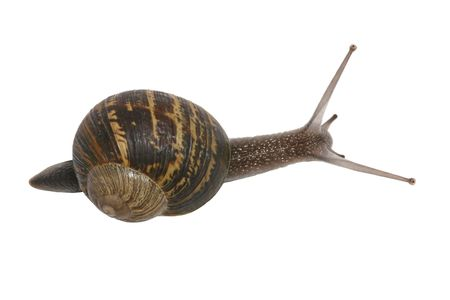 A snail crawling to its destination isolated over white Banco de Imagens - 831933