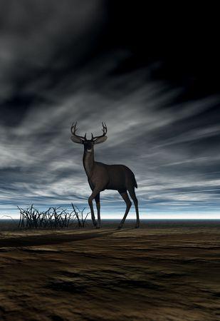 A deer (buck) feeding on grass under a dark dramatic sky photo