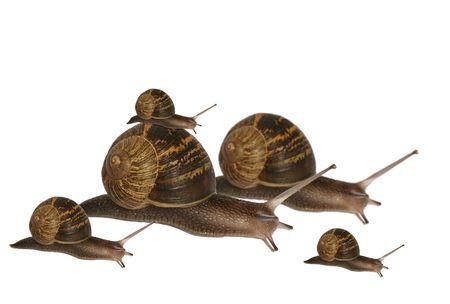 babosa: Una familia de caracoles que viajan a su destino