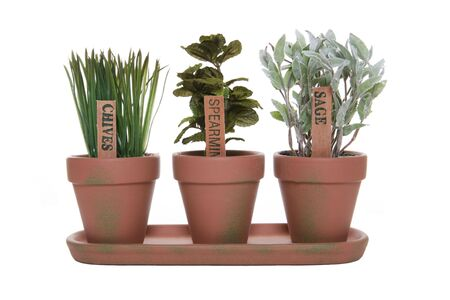 fertilize: Three herbs, chives, spearmint, and sage in potted plants Stock Photo