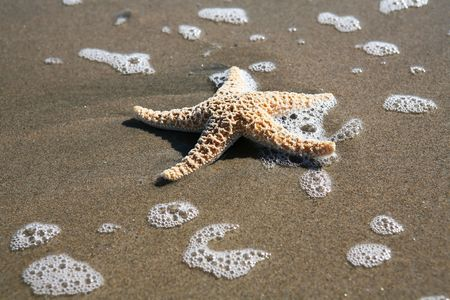 A starfish laying in the sand on the beach near the water photo